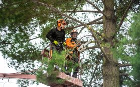 How Clients Can Cross-Reference an Arborist in Sydney